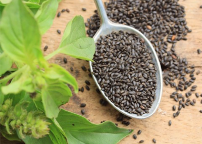 THE STORY OF BASIL SEED